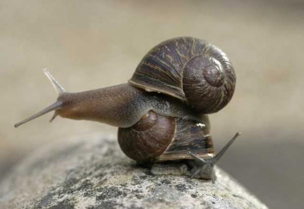 Jeremy The Lovelorn Left-Handed Snail Finally Finds His Shell-Mate