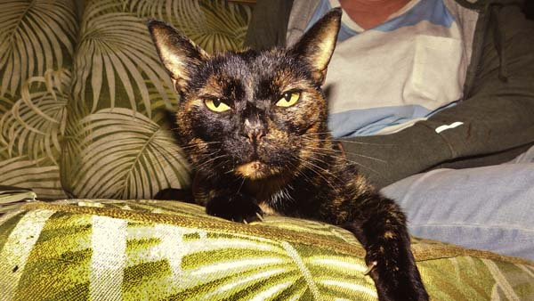 Hawaiian Family's Cat Found & Returned After 15 Long Years