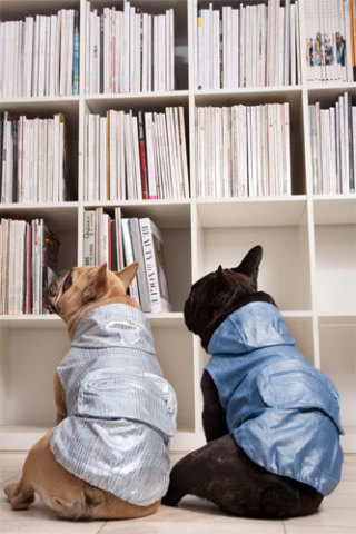 Library dog wear? Trendy4Paws: ©Trendy4Paws