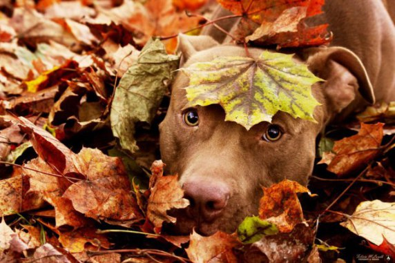 Dog Hiding in Leaves (Image via Life With Dogs)