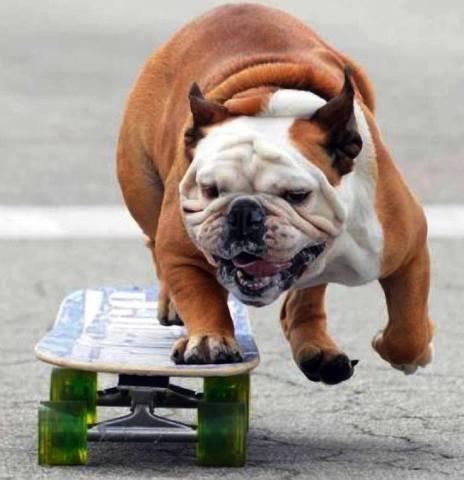 Skateboarding Dog (Image via Life With Dogs)