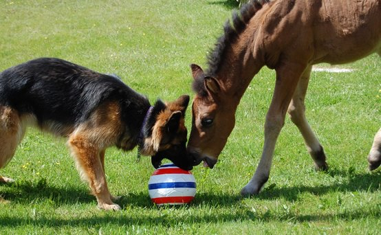 Dog and Horse Playing Ball (Image via Life With Dogs)