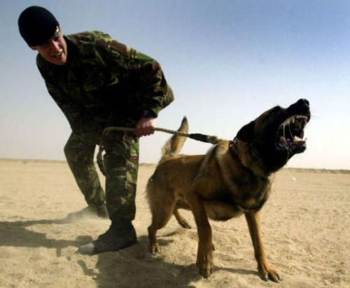 Hero Canine