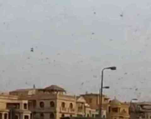 A Plague of Locusts Descending on Giza (You Tube Image)