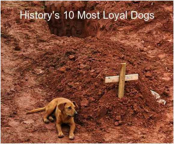 loyal dogs Domestic cats are loyal, but perhaps not for the same reason dogs are loyal  depending on the type of owner you are, your dog may be loyal to you because.