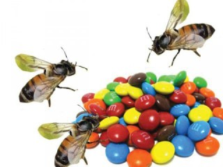 Bees love their M&M's too!: image via nation.com.pk