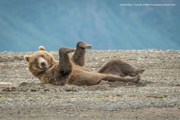 """Doing The Sand Dance"" © Janet Miles / Comedy Wildlife Photo Awards 2020 (Entry)"
