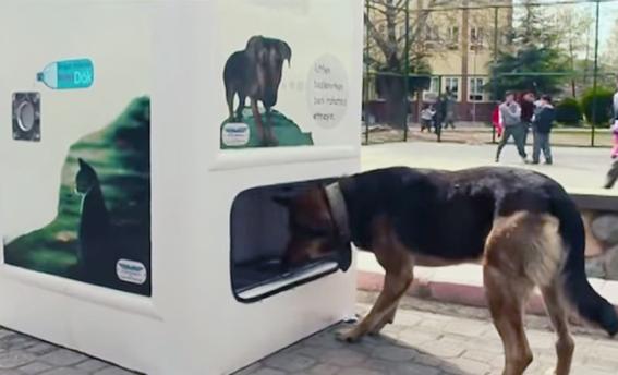 The Pugedon Smart Recycling Boxes (Image via Kelowna Now)