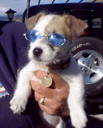 Doggie Shades