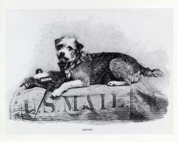 Illustration of Owney the Mail Dog (Public Domain Image)