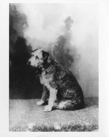 Portrait of Owney (Public Domain Image)