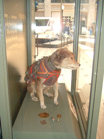 Owney, Now in Residence at the National Postal Museum (Public Domain Photo)