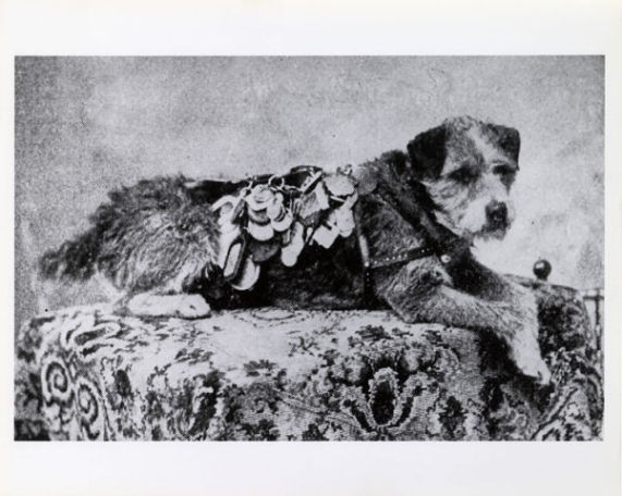 Owney and his Coat of Many Tags (Public Domain Image)