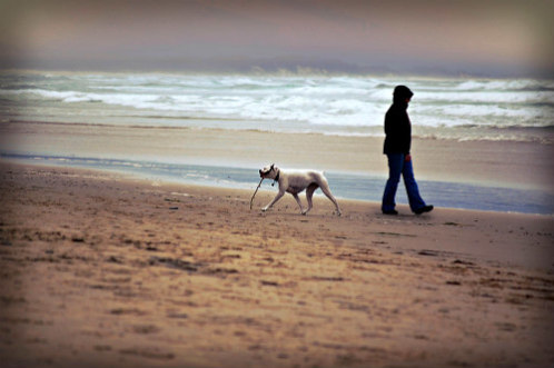 Man Walking His Dog on the Beach: Use caution on warm days when exercising pets