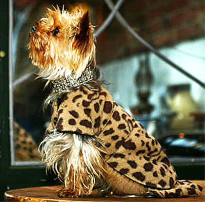 Manfred of Sweden Leopard Jacket with Swarovski Collar: © Björn Gärdsby MoS