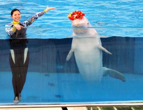 Marine Water Shows: Marine mammals capable of having feelings