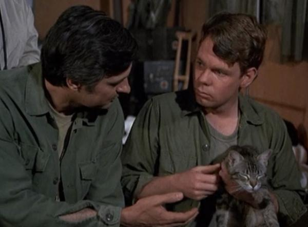 Hawkeye Talks a Troubled Soldier out of Holding a Cat