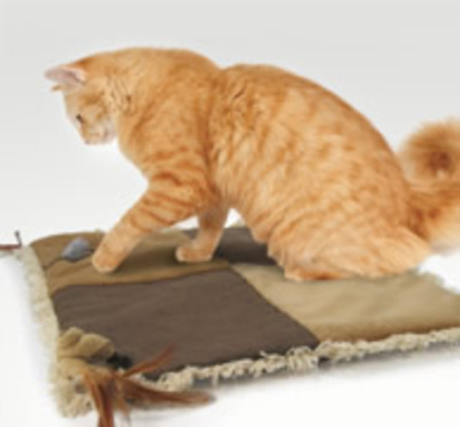 Baby Your Cat With Its Own Play Mat Petslady Com