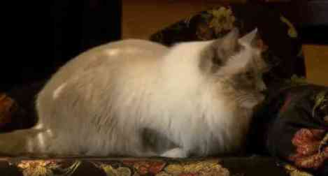 Matilda, The Algonquin Cat (You Tube Image)