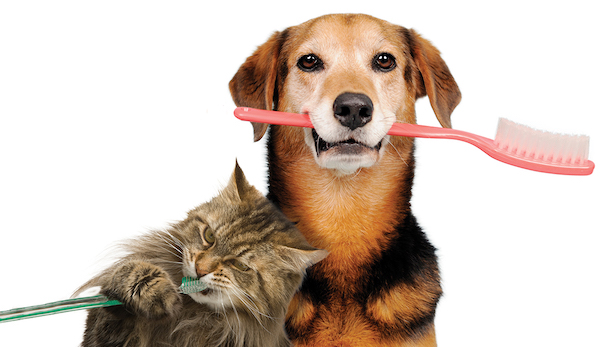 Cat and dog with toothbrushes