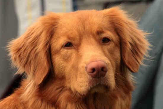Medical alert dogs need to work distraction free: Let working dogs do their jobs