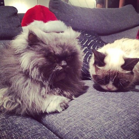 Colonel Meow Celebrates Christmas with Grumpy Cat (Image via Facebook)