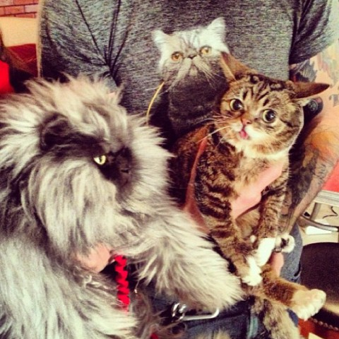 Colonel Meow with Lil Bub (Image via Facebook)