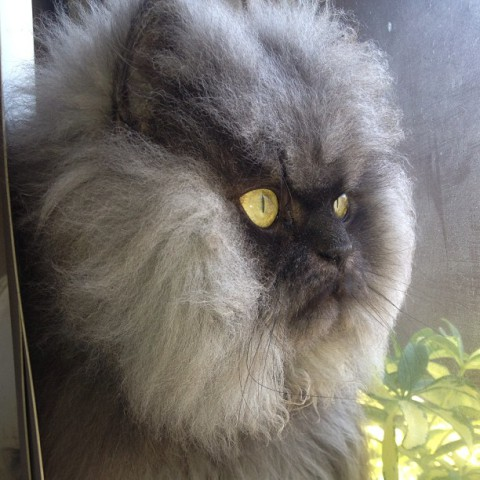His Imperial Hairiness Colonel Meow (Image via Facebook)