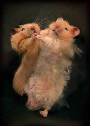 Dancing Hamsters (Image via 1,000,000 Pictures)