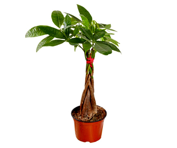 10 houseplants safe for pets