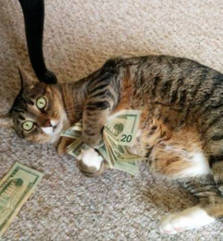 Cat and Cash (Image via The Cat House On The Kings.com)