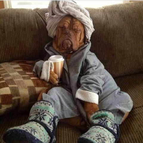 Relaxed Dog (Image via Facebook)