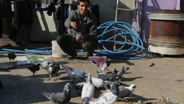 Pet Pigeons Return To The Skies Above Mosul
