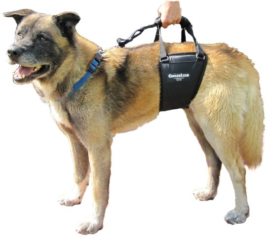 Mobility Aids Can Help Pets Keep Moving