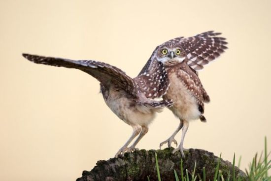 Comedy Wildlife Photography Award: Highly Commended, Megan Lorenz, Photographer