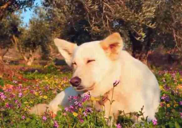 Relaxation Music for Dogs (You Tube Image)