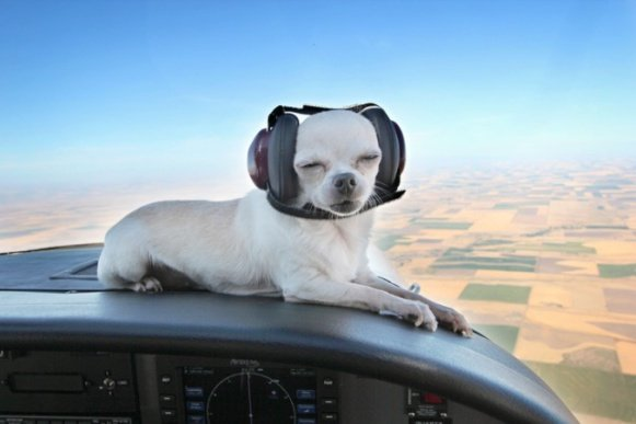 Dog Aviation Ear Protection