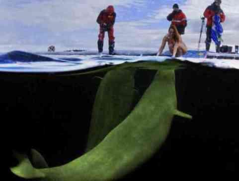 Natalia Prepares to Free-Dive Nude With Beluga Whales (You Tube Image)