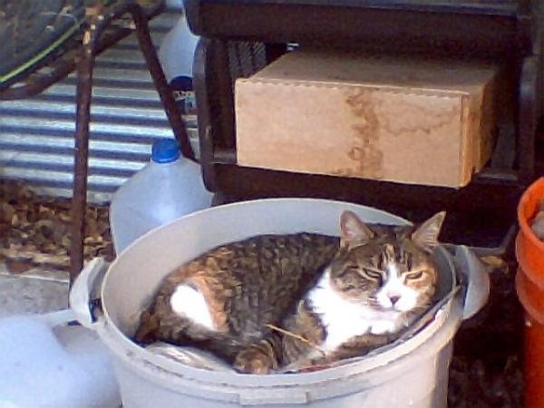Naomi Relaxing in a Bucket of Mulch