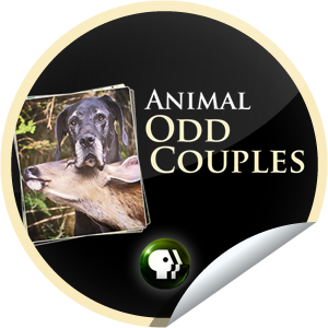 PBS Nature Animal Odd Couples