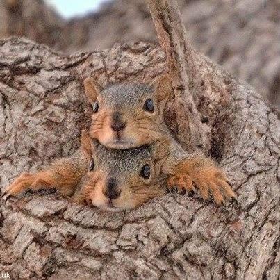 Squirrel Jam (Image via Nature Gallery)