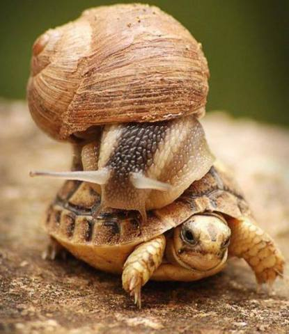 Snail Riding a Turtle (Image via Nature Gallery)