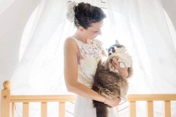 Post-Wedding Photo Shoots With Your Cat Make The Perfect Honeymewn