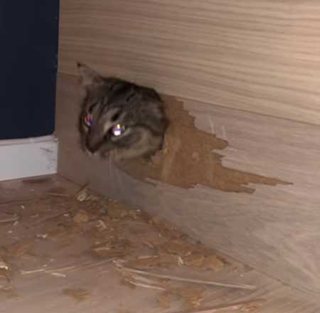 Missing Cat Found Inside Homeowner's New Wooden Staircase