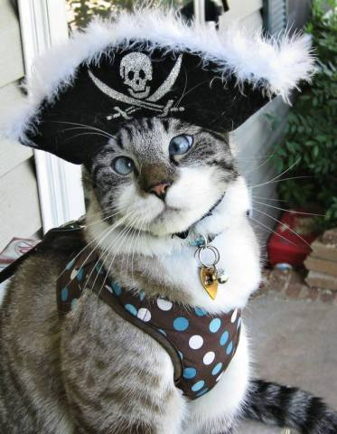 Pirate Cat (Image via Nothing But Kitty Cats)