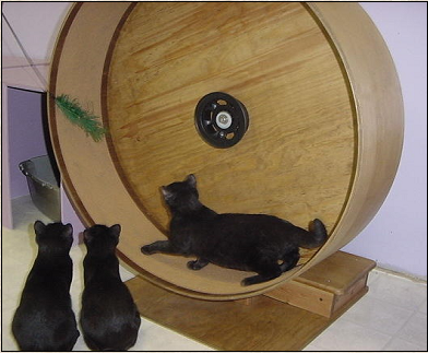 Cat Exercise Wheel, custom made by Sunnica: ©Sunnica