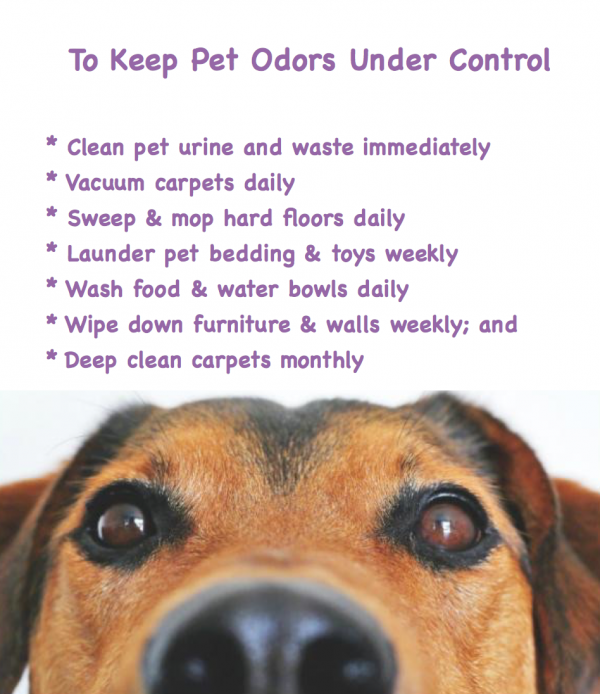 Remove stinky pet odors from your home