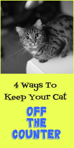 4 proven ways to keep your cat off the counter. Black Bedroom Furniture Sets. Home Design Ideas