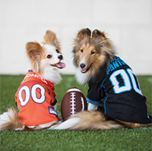 Official NFL gear for dogs at PetSmart
