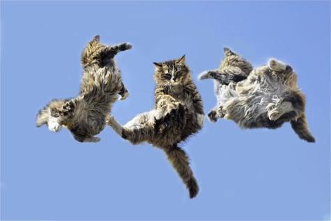 Cats Falling: Source: ohmgodfacts.com